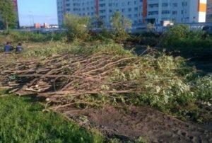 Вырубка зеленых насаждений на строительном объекте. Как избежать штрафов