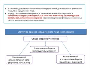 Единоличный исполнительный орган юридического лица: понятие и функции